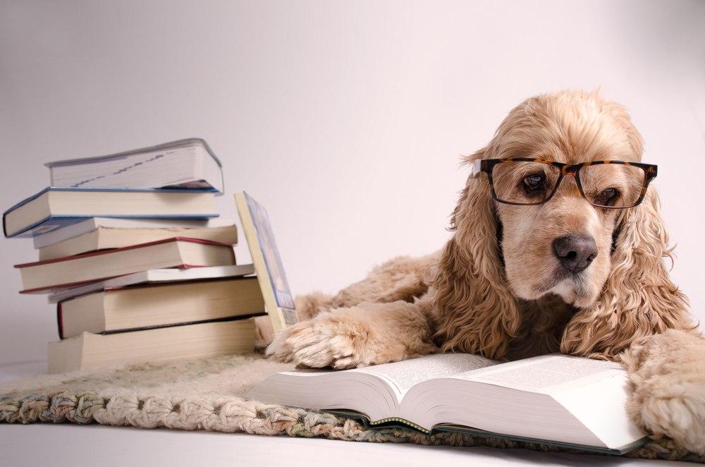 chien-intelligent